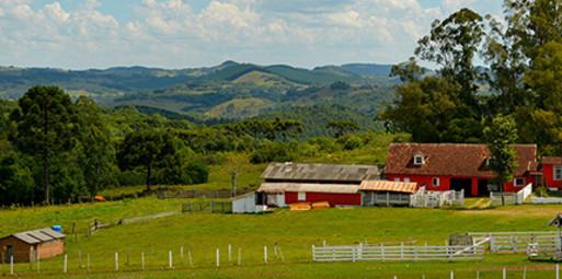 Balneário Camboriú para Caxias do Sul